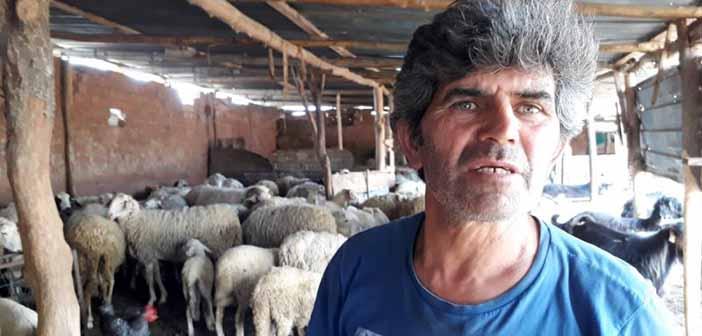 """""""Altın madeni açıldıktan sonra 5 bin hayvanım öldü. 6 daire parası zararım var"""" Besici Sipahi, videoda anlatıyor:"""
