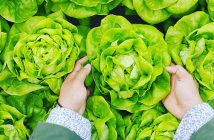 Bir Paradigma Olarak Halkların Gıda Egemenliği Mücadelesi