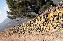 Kazdağlarını ve bütün ormanları kurtarmak için… Ne yapmalı?