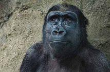 """28 bin 338 tür """"insan faaliyetleri"""" nedeniyle tükenme tehlikesiyle karşı karşıya"""