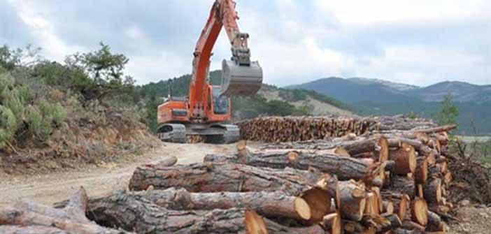Ağaçlandırma Seferberliği Ormanlardaki Yıkımı Önler mi? - Erdoğan Atmiş